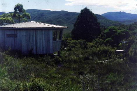 Melaleuca bird hide