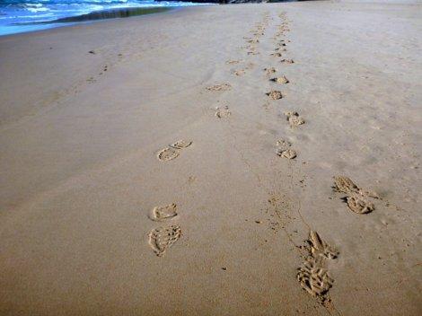 Footloose and free at Tunkalilla Beach