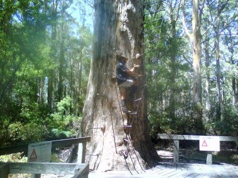 Climbing the Gloucester Tree